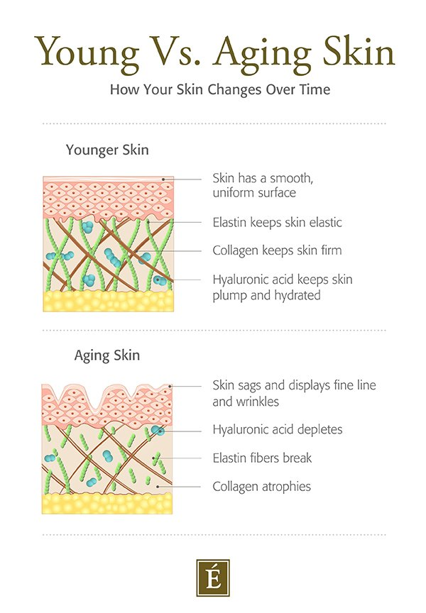 young skin vs. aging skin cross section